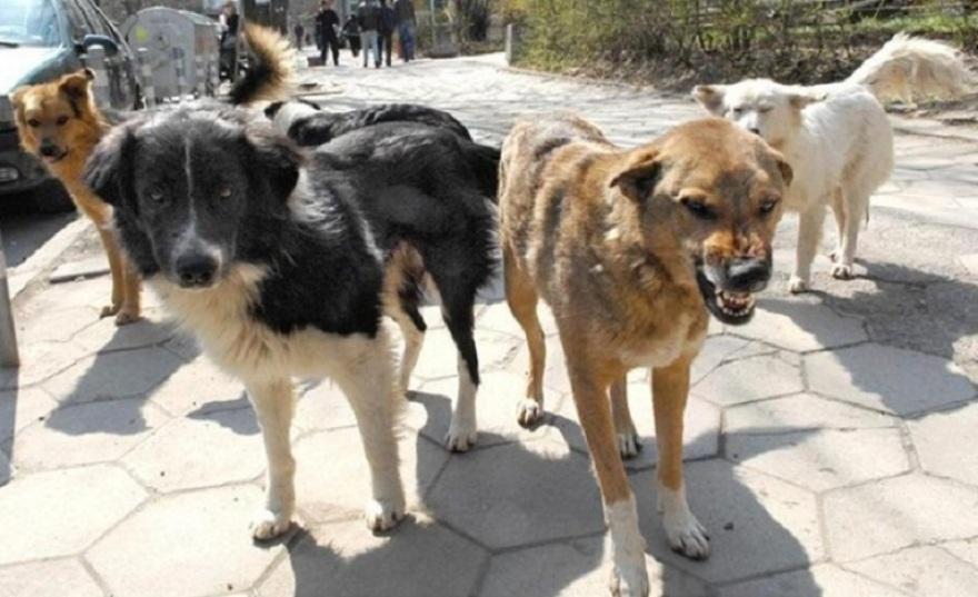 Хаос по скопските улици – Кучиња скитници вчера искасале тројца скопјани!