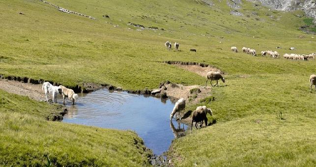 Нема евиденција колку од пасиштата на Шара се активни или напуштени