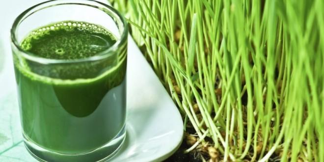 Анализа: Што му се случува на организмот ако пиеме сок од пченична трева
